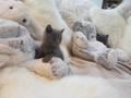 Benji's cat