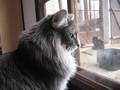 Chatterie Harpsi'Cat