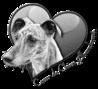 Coeur de Chien Abandonné