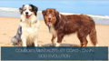 Comportementaliste et coach canin - Dog Evolution