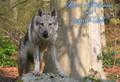 Domaine des Loups de JAD