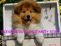 DU CLOS D'AMITY STAR
