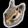 Ecureuils de corée