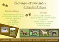 Elevage et pension d'Arguiller d'Anjou