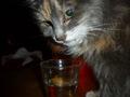 élizabeth, pet-sitter dans le 75
