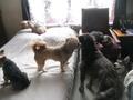 Garde de chien et chat en maison tout confort