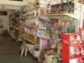 Kokoon Animal Shop - Le Cannet