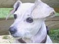 La pension des animaux heureux à Morainvilliers