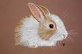 Léna Imagique - portraits d'animaux