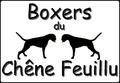 Les Boxers du Chêne Feuillu