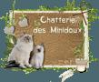 Chatterie des Minidoux