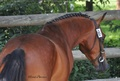 Marion PAVARD Ostéopathe Equin