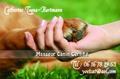 Praticienne diplômée en massages thérapeutiques