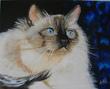 Nadia artiste peintre
