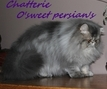 A LA CHATTERIE O'SWEET PERSIAN'S