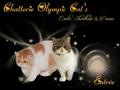 Olympic Cat's