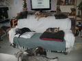 Pension canine et féline haute gamme