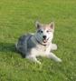 Pension Canine - Les Loups d'Amanthis