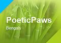 PoeticPaws