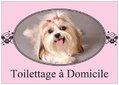 Toilettage canin à domicile