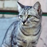 apprendre chat obéir