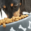 Les 7 règles de l'alimentation du chien