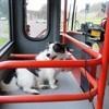 Les troubles de santé du chien en transport