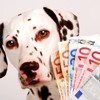 Un chien, combien ça coûte ?
