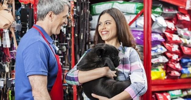 conseils achat chien