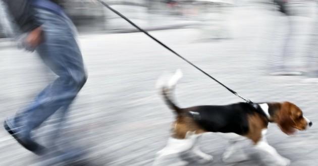 apprendre chien marche en laisse