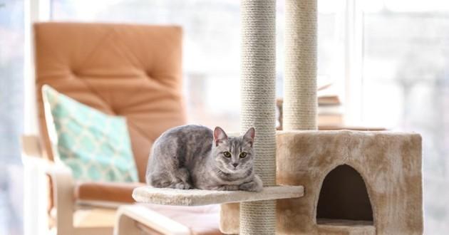 arbre à chat pour des chats d'appartements heureux
