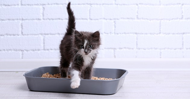 chat-utilise-pas-litière