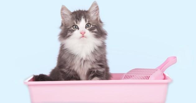 hygiène litière chat
