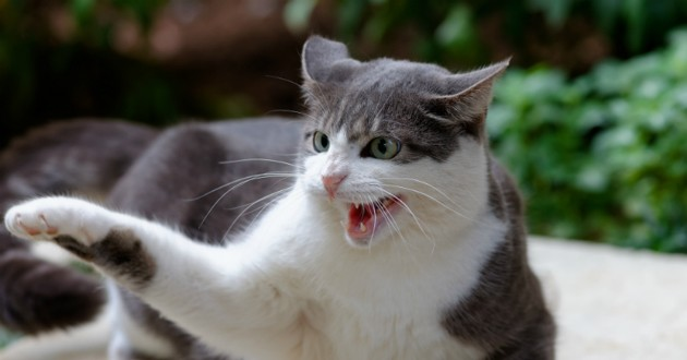comportements etranges chat