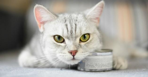 aggressivité prédatrice du chat