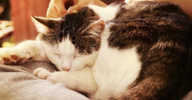 ronronnement chat