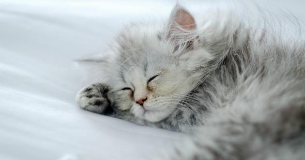 Chaton ou acheter son chat