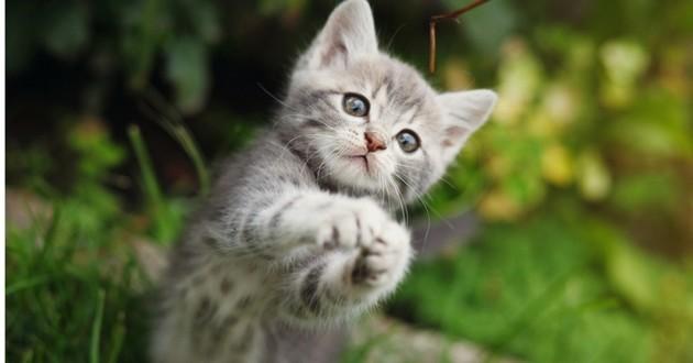 choisir chaton bonne santé