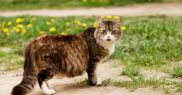 alimentation chatte gestation