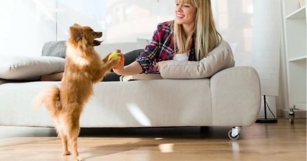 choisir chien appartement