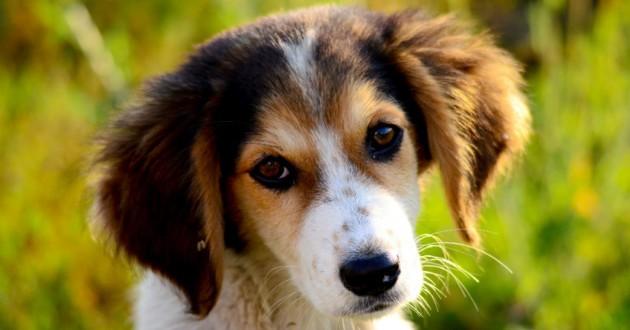 cloture anti fugue chien