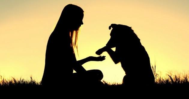 age humain du chien