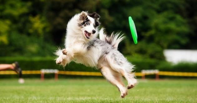 jeu chien