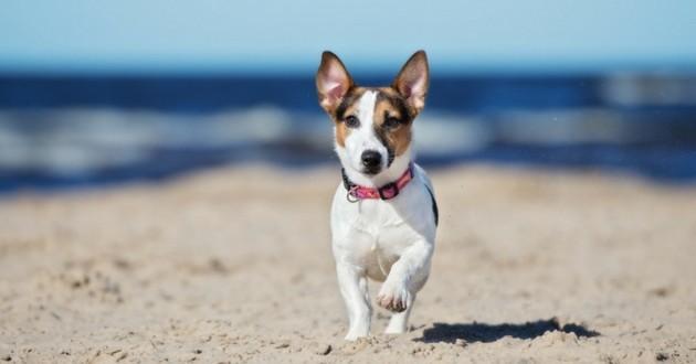 plage chien
