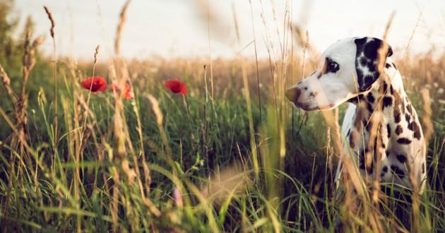 chien plantes toxiques