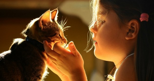 cohabitation chat enfant