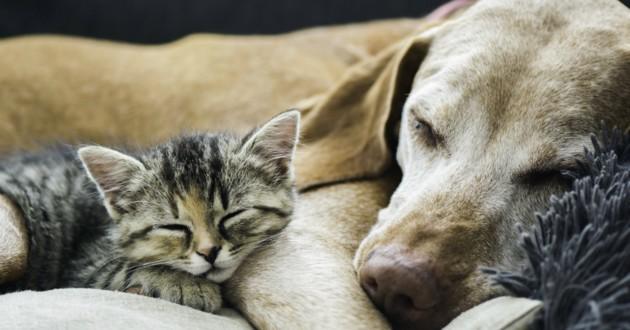 rencontre chaton et chien)