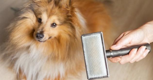 brosser chien
