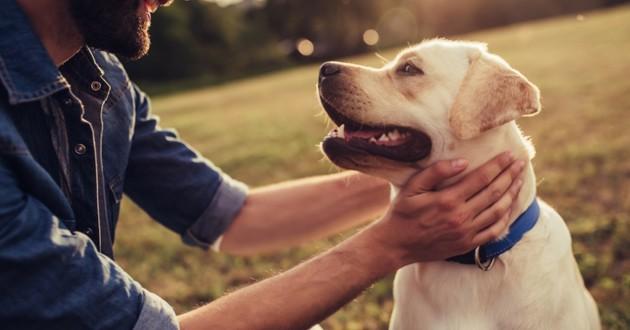 quelle methode pour eduquer son chien