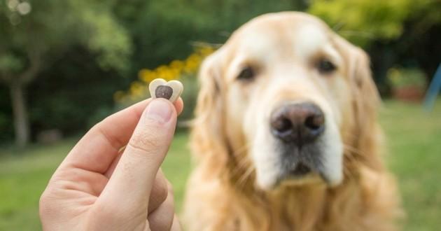 eduquer son chien à manger